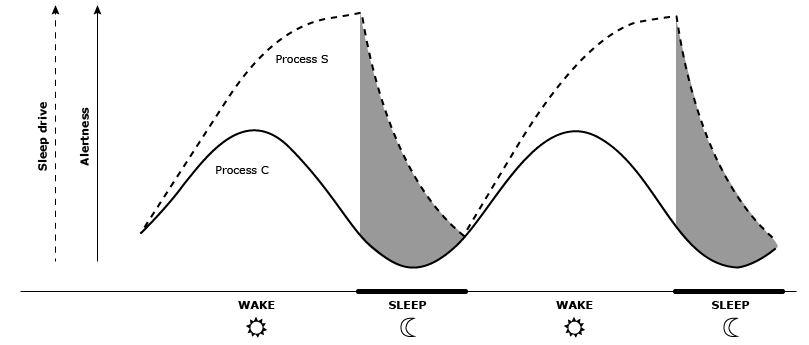 twee procesmodel voor slaap